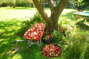 落ちるリンゴをみて引力を発見したニュートン