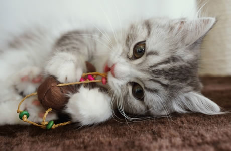 猫の幸せ画像