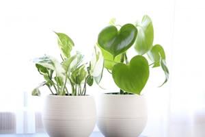 空気をきれいにする観葉植物の研究
