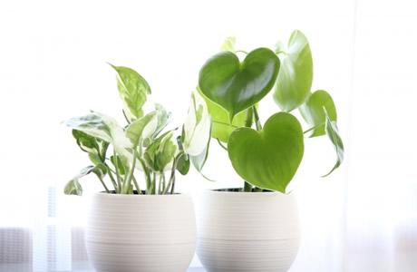 観葉植物で空気清浄