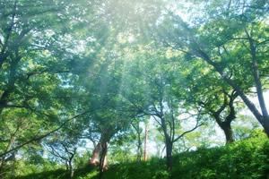 観葉植物は天然の空気清浄機