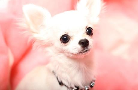 【幸福感】ペットの癒し効果!犬や猫に触れると人も安らぎホルモンが分泌され、ストレスが解消する