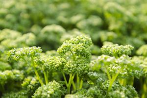 鉄分の多い食べ物 野菜の場合は「切干大根、パセリ、唐辛子」