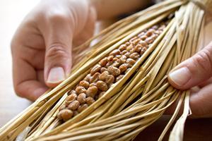 腸内環境を改善する納豆の特徴