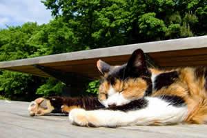 自分の心を満足させる充実したボッチが主流!動物でたとえると、飼い主に従順な犬ではなく、なんでも独りでこなす高貴な猫のような存在