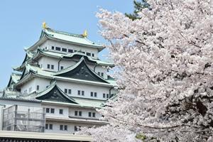 名古屋の花粉予報