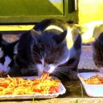 【海外/外国】猫の好きなご飯やエサは、魚じゃなかった!?世界の猫達の食べ物は?アメリカではピザ、イタリア・ギリシャはパスタを食べる猫