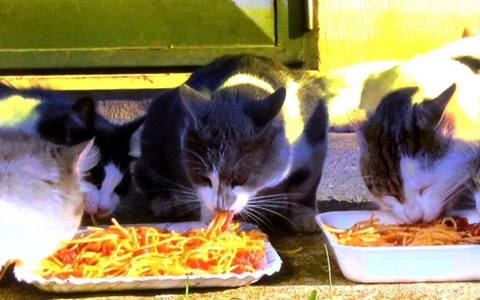 猫の好きなご飯やエサは、魚じゃなかった!イタリアでピザを食べる猫