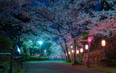 桜のお花見で食べたい花見弁当&料理レシピ集