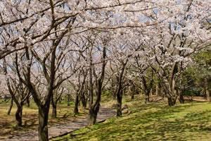 春の歓迎にふさわしいカラフルな華やかな花見弁当