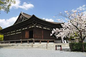 近畿地方の桜の開花予想・予報、桜の満開日