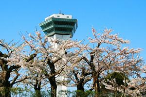 函館「桜の開花予想は、4月26日頃。満開日は5月1日頃」