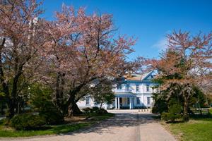 札幌「桜の開花予想は、4月29日頃。満開日は5月3日頃」