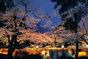 金沢「桜の開花予想は、4月3日頃。満開日は4月9日頃」