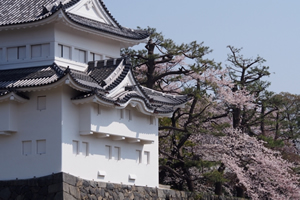 名古屋「桜の開花予想は、3月22日頃。満開日は3月31日頃」