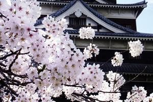 広島「桜の開花予想は、3月26日頃。満開日は4月4日頃」