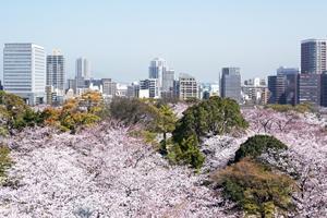 福岡「桜の開花予想は、3月23日頃。満開日は3月31日頃」