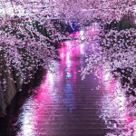【桜ソング/歴代名曲/ランキング】2017年!春の定番・おすすめの歴代名曲!ザ・ベスト10選「カラオケ、入学式、お花見の春のイベントで聞きたい名曲」