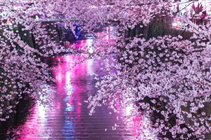 春の定番・人気!おすすめの名曲「春、桜ソング・ランキング・ザ・ベスト10選」
