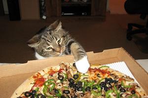 アメリカやオーストラリアの猫はピザを食べる