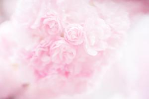 桜ソング⑧「レミオロメン/Sakura(2011年)」