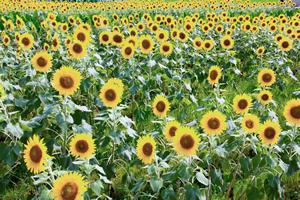 夏ソング⑨「ケツメイシ/夏の思い出(2003年)」