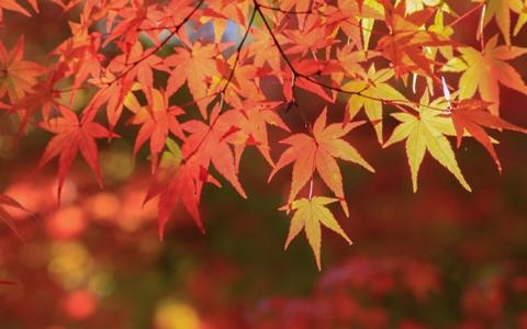 【秋の長夜/過ごし方】心と体をリラックスさせる秋の過ごし方「暇!自宅でデキるリフレッシュ方法の解説」