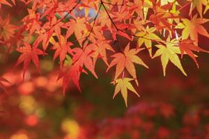 心と体をリラックスさせる秋の過ごし方