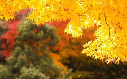 2016年、今年のシルバーウィークや秋休み期間