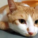 """【猫の感情表現/行動】猫の気持ちが、鳴き声や行動で分かる!飼い猫・ペットの信頼度「好きな飼い主にしかしない""""猫ちゃん""""の態度から、愛情表現や行動の意味、猫の心理を解説」"""