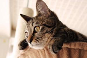 探し回る猫