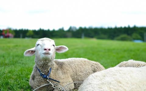 食べ物と生き物の数え方、簡単な覚え方を解説