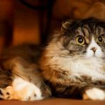 【猫/平均寿命】室内の家猫・飼い猫は、15年以上!?野良猫の寿命は、5年!?「10年生きると化け猫になる話は、真っ赤なウソ!?年々伸び続ける猫の平均寿命を解説」