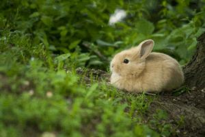 草食系の小動物