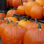 【何故?ハロウィンでカボチャを使う理由】ケルト人の収穫祭と生贄の儀式~ハロウィンの由来と起源~