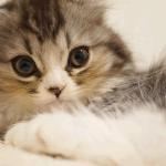 [猫好き女子の性格、特徴] 家猫を飼う女性のあるある心理、恋愛傾向「猫派の女性は、個性派!?彼に尽くす受け身な女性!?よくある性格的な特徴を解説」