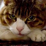 【猫好き男子/性格/特徴】猫を飼う男性のあるある心理、恋愛傾向「犬より猫派の男性は、頭のデキがいい!?よくある性格的な特徴を解説」