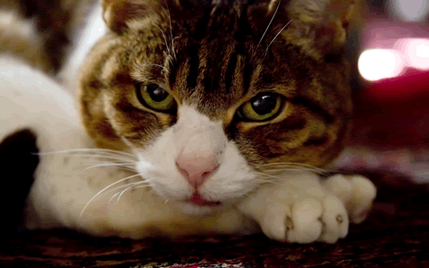 猫好きの性格と特徴、猫を飼う男子&女子のあるある心理