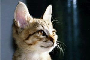 【猫の睡眠時間/平均】子猫と成猫、高齢の猫は何時間寝るのか~猫の睡眠と平均時間~