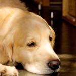 【犬好き男性/性格/特徴】室内犬を飼う男子のあるある心理、恋愛傾向「犬派の男性は、協調性が高く仲間思い!?優しさのある犬好き男子の特徴を解説」