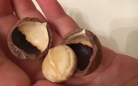 食用マカデミアナッツオイルの危険性や副作用と正しい食べ方、使い方