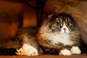 室内の家猫・飼い猫の平均寿命、野良猫の平均寿命