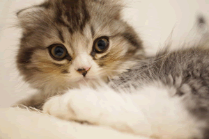 猫好きの性格と特徴、猫を飼う女子のあるある心理