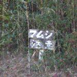 【マムシの住処/巣穴】毒蛇のニホンマムシ、危険な蝮はどこにいる?~マムシの特徴から巣のある場所を解説~