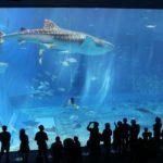 【水族館のサメが水槽の小魚を食べない理由】十分なエサが与えている場合、他の小魚を食べない