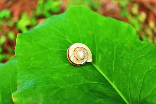 【カタツムリの殻】カタツムリがコンクリートを食べて殻を作る理由