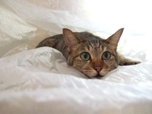 猫の耳と不思議な行動