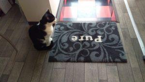 猫は玄関でお出迎えをする