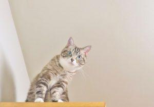 猫は、犬の2倍。人間の4~8倍の聴力を持つ